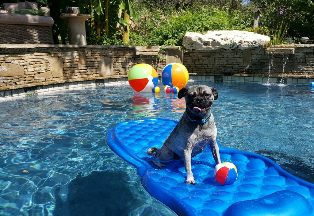 Puppy Up Pool Pawty