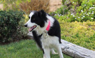 Jackson w/ Dog Collar